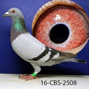 SIRE WAS 1ST NATIONAL ACE PIGEON